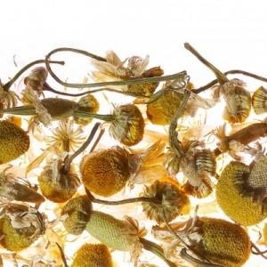 Camomile Meadow / Ромашковый луг