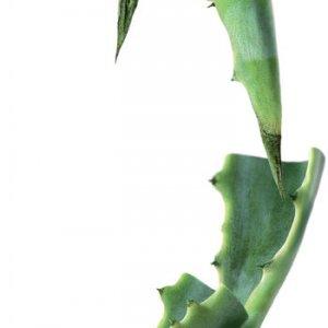 Органический сироп агавы